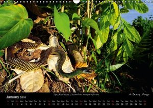 SNAKES / UK-Version (Wall Calendar 2016 DIN A3 Landscape)