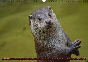 Otter. Frech, laut und clever (Wandkalender 2016 DIN A3 quer)