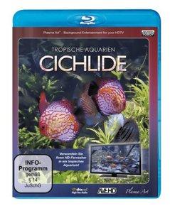 Tropische Aquarien-Cichlide