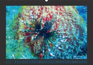 Unterwasserwelt - Das Leben am Korallenriff (Wandkalender 2016 D