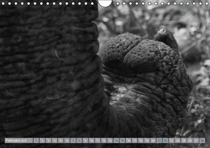 Elephants up close and personal (Wall Calendar 2015 DIN A4 Lands