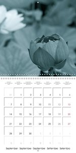 Lotus flowers (Wall Calendar 2015 300 × 300 mm Square)