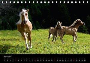 Wunderschöne Haflingerwelt (Tischkalender 2016 DIN A5 quer)