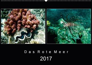 Das Rote Meer ? 2017