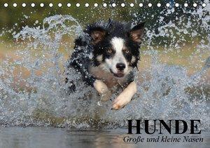 Hunde. Große und kleine Nasen (Tischkalender 2016 DIN A5 quer)