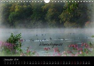 Lebensraum Wasser (Wandkalender 2014 DIN A4 quer)