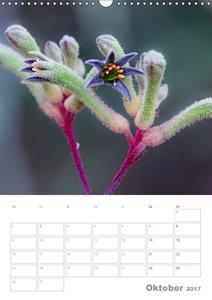 g\'day Australien 2017 (Wandkalender 2017 DIN A3 hoch)
