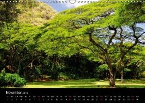 Ochsmann, S: Trees of Hawaii - UK Version