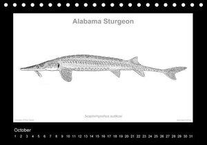American Sturgeons (Acipenseridae): Fish as Art (Table Calendar