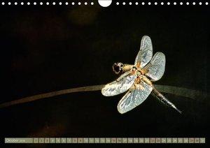 Die fabelhafte Welt der Libellen (Wandkalender 2016 DIN A4 quer)