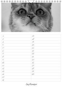 Schlögl, B: Geburtstagskalender Katzenportraits (Wandkalende