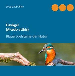 Eisvögel (Alcedo atthis)