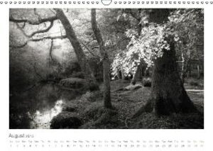 Into the Forest (Wall Calendar 2015 DIN A3 Landscape)