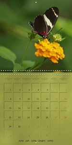Delicate Beauties Exotic Butterflies (Wall Calendar 2015 300 × 3
