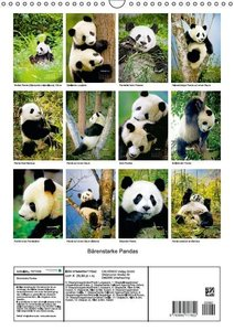 CALVENDO: Bärenstarke Pandas (Wandkalender 2015 DIN A3 hoch)