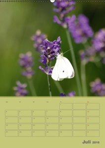 Naturbilder (Wandkalender 2016 DIN A2 hoch)