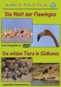 Welt der Flamingos/Wilde Tiere in Südkenia