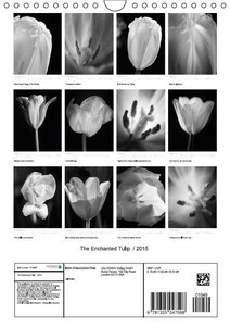 The Enchanted Tulip / 2015 (Wall Calendar 2015 DIN A4 Portrait)