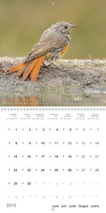 BIRDS - FEATHERED FRIENDS (Wall Calendar 2015 300 × 300 mm Squar