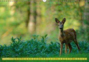 Wildes NRW - Beeindruckende Tierwelt (Wandkalender 2016 DIN A3 q