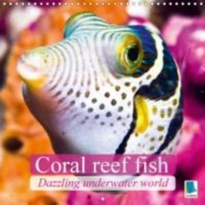 Dazzling underwater world: Coral reef fish (Wall Calendar 2015 3
