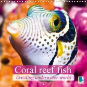 Dazzling underwater world: Coral reef fish (Wall Calendar 2015 3