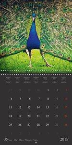 Birds - Portraits of a special kind (Wall Calendar 2015 300 × 30
