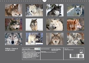 Wolves . Faces of social hunters (Wall Calendar 2015 DIN A3 Land