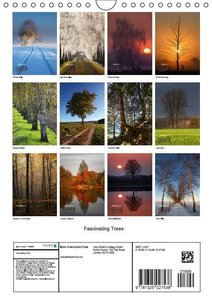 Fascinating Trees (Wall Calendar 2015 DIN A4 Portrait)