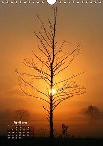 Fascinating Trees (Wall Calendar 2015 DIN A4 Portrait)