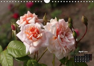 Charming Roses (Wall Calendar 2016 DIN A4 Landscape)