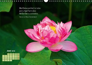 Natur-Meditationen - Nimm Dir Zeit Silvia (Wandkalender 2016 DIN