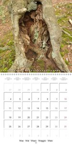 Magic Forest (Wall Calendar 2015 300 × 300 mm Square)