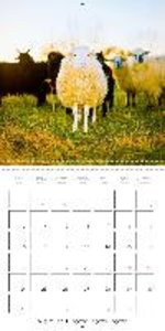 Farmyard animals (Wall Calendar 2015 300 × 300 mm Square)