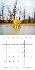 Farmyard animals (Wall Calendar 2015 300 × 300 mm Square)