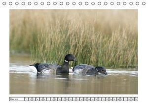 Geschnatter - Enten und Gänse in Deutschland (Tischkalender 2015