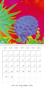 Remixing Nature (Wall Calendar 2015 300 × 300 mm Square)