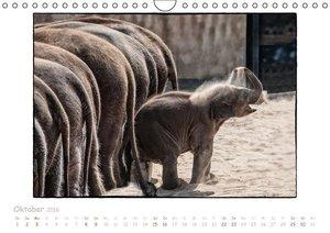 Einfach Tierisch (Wandkalender 2016 DIN A4 quer)