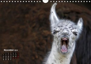 Berg, M: Kamele (Wandkalender 2015 DIN A4 quer)