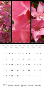Trilogy of flower colours (Wall Calendar 2016 300 × 300 mm Squar