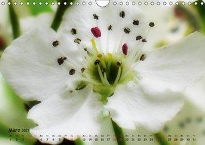 Weiß - ein Blütentraum