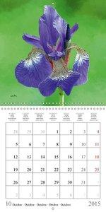Les Iris (Calendrier mural 2015 300 × 300 mm Square)