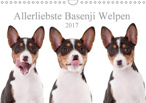 Allerliebste Basenji Welpen 2017