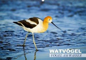 Vögel am Wasser - Watvögel (Wandkalender 2016 DIN A2 quer)
