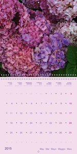 Hydrangeas 2015 - Impressions from the Garden (Wall Calendar 201