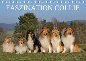 Faszination Collie 2017