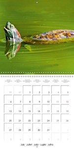 Turtles - Ornamental reptiles (Wall Calendar 2015 300 × 300 mm S