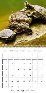 Turtles - Ornamental reptiles (Wall Calendar 2015 300 × 300 mm S