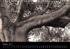 Botanica in B&W (Wall Calendar 2015 DIN A4 Landscape)
