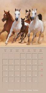 Chevaux arabes . Les rois du désert (Calendrier mural 2015 300 ×